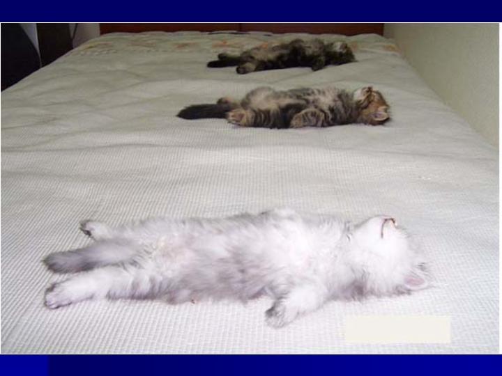 Сновидение может насторожить, если кот, пришедший к вам во сне, вам знаком.